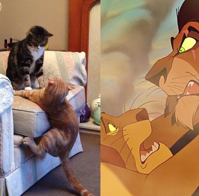 funny cats lion king Nooooo! Not Again!