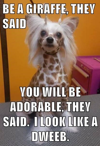 BE A GIRAFFE, THEY SAID YOU WILL BE ADORABLE, THEY SAID. I LOOK LIKE A DWEEB.