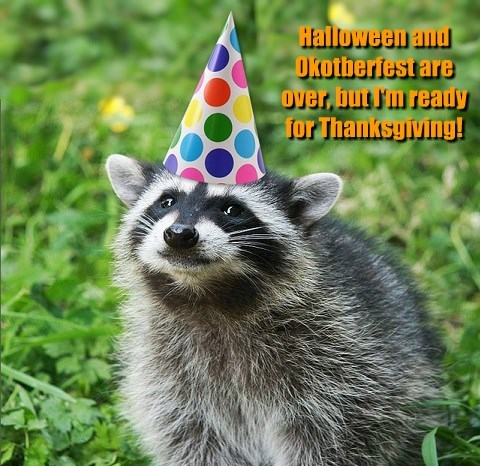 thanksgiving,racoon,funny,animals