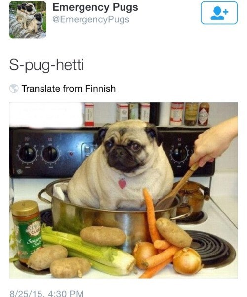 funny memes spaghetti pug pun