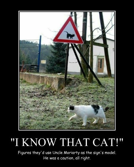 """""""I KNOW THAT CAT!"""""""
