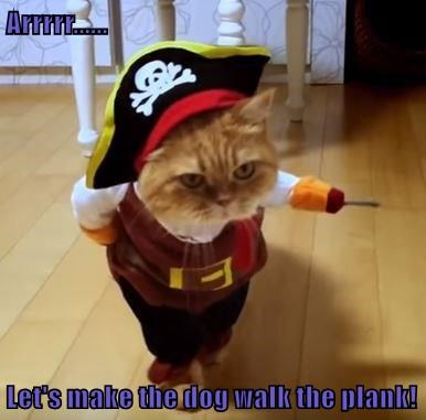 animals cat dogs plank Pirate walk caption - 8582098688