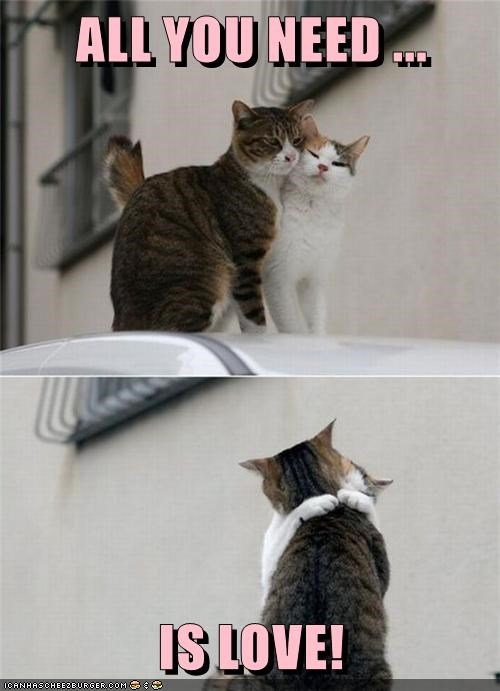 animals hugging love caption Cats need all - 8582172672