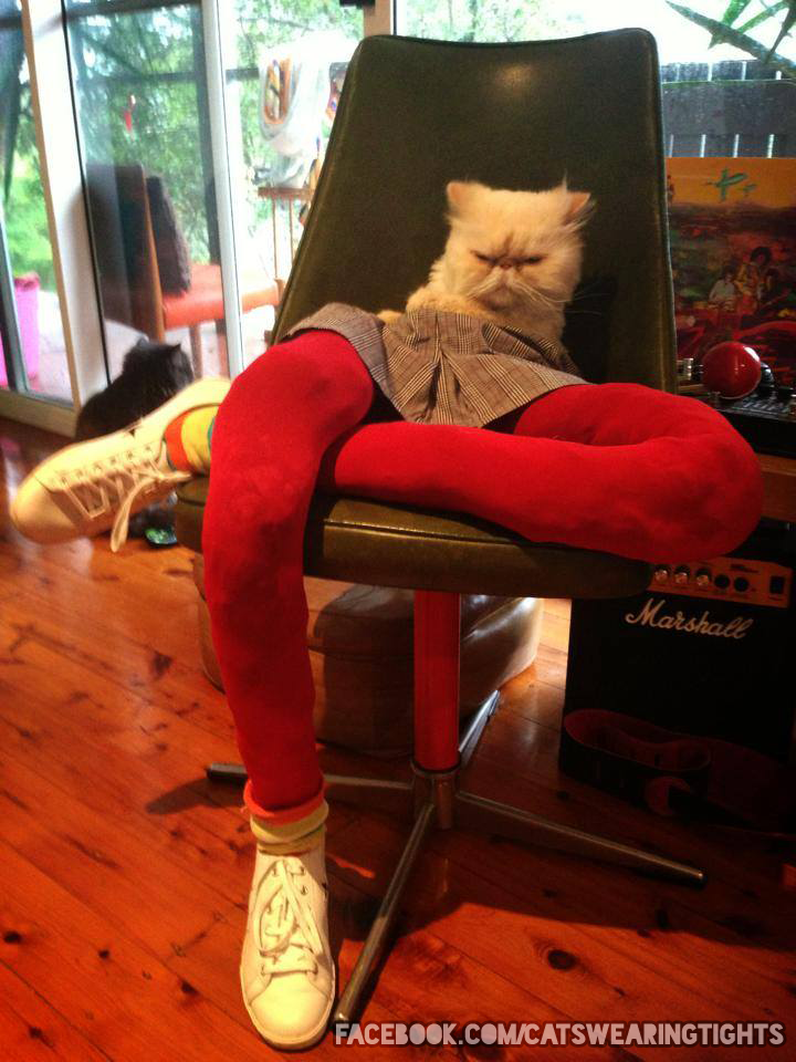 funny cats tights And This Cat has Had Just About Enough of Playing Dress Up