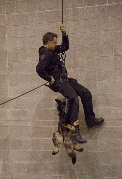 cute dogs image Police Dog Puppy Needed Some Extra Support During Belay Training