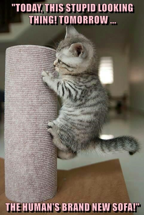I Love Taking On New Challenges Lolcats Lol Cat Memes Funny