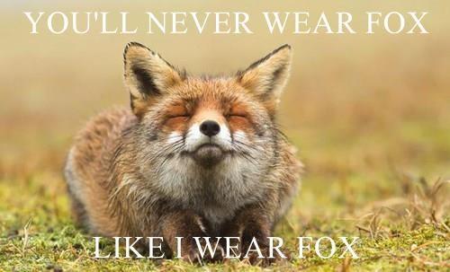 animals fur fox animals - 8582464000