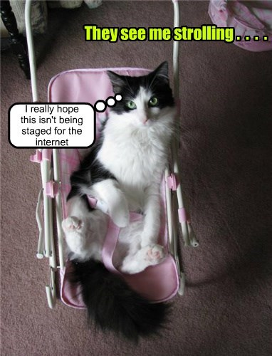 the internets they see me rollin stroller caption Cats funny - 8582646528