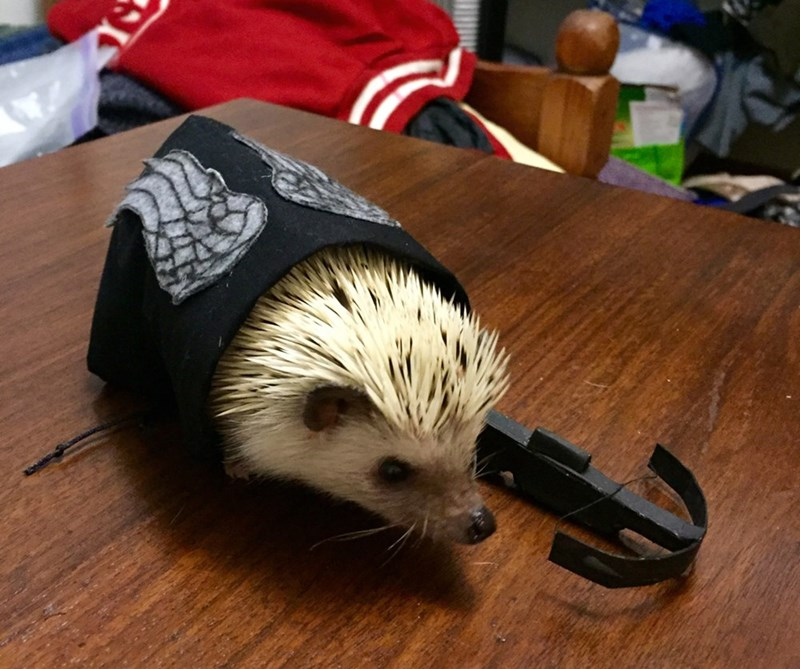 Hedgehog Dixon