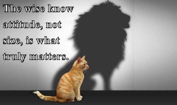 cat,matters,attitude,lion,size,caption,truly