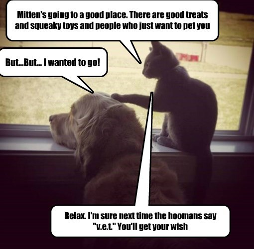 "Mitten's going to a good place. There are good treats and squeaky toys and people who just want to pet you But...But... I wanted to go! Relax. I'm sure next time the hoomans say ""v.e.t."" You'll get your wish"