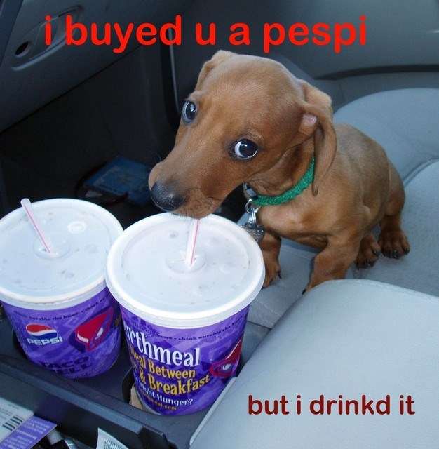 dogs pepsi puppy corgi caption funny - 8582879232