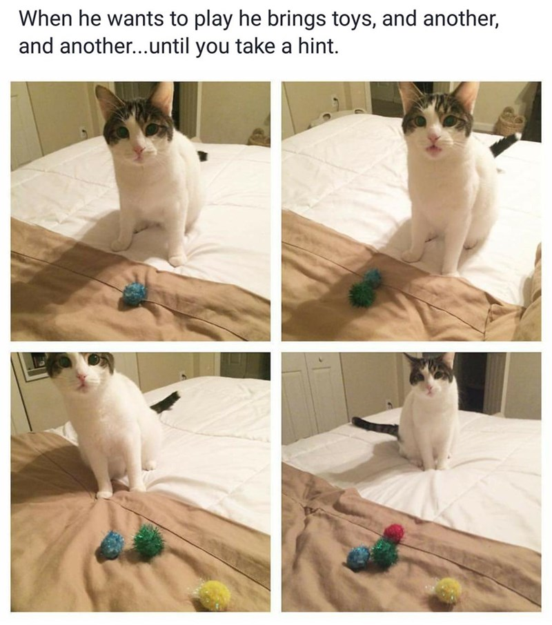 cute cats image Are You Ready to Play Now? How About Now?