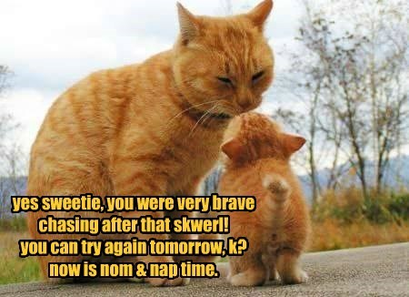 yes sweetie, you were very brave chasing after that skwerl! you can try again tomorrow, k? now is nom & nap time.