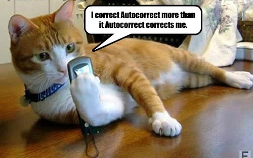 spell check caption Cats funny - 8583180032