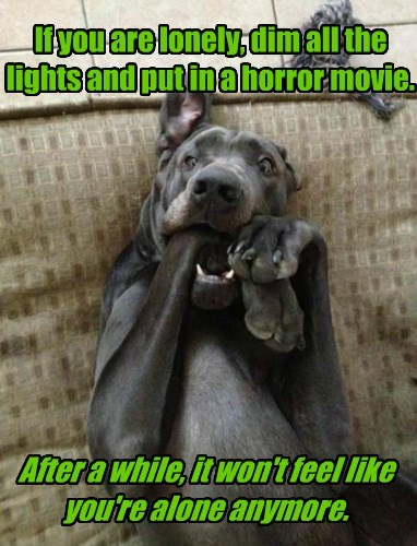 anymore,dogs,lights,horror movie,not,caption,lonely,alone,dim