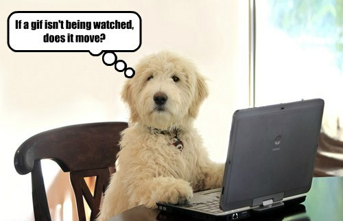 isnt gif dogs move being watched caption - 8583184384