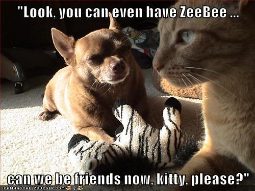 zebra,cat,dogs,zeebee,have,friends,now,caption