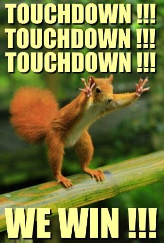 NFL Squirrel luvs when his team scores!