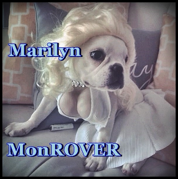 dogs marilyn monroe caption rover
