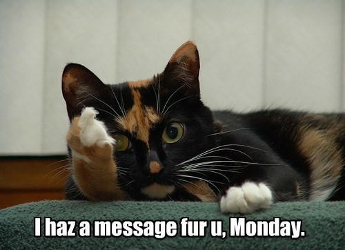 middle finger mondays caption Cats funny - 8583490048