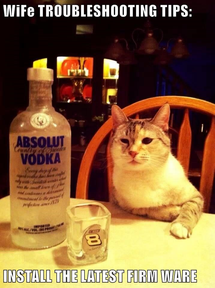 animals drinking wife wifi caption Cats funny - 8583566336