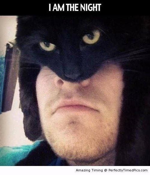 batman cats image I Don't Fear Crime, Crime Fears Me