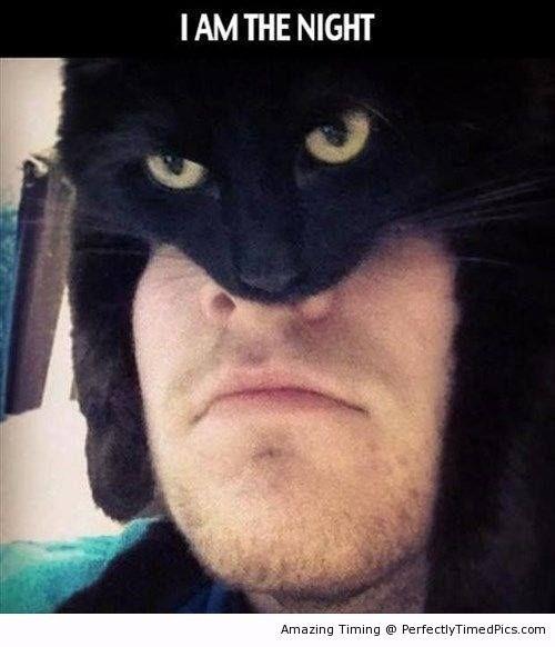 batman cats image I Don't Fear Crime, Crime Fears Me