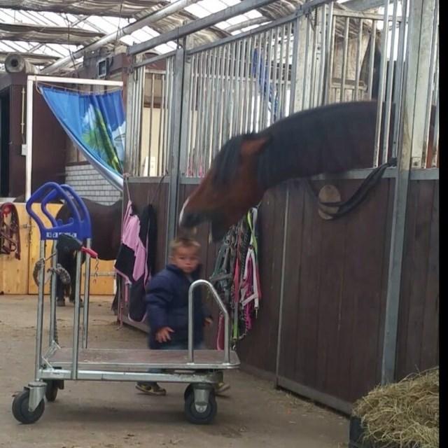 funny photobomb horse biting kid