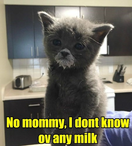 milk kitten in trouble caption Cats funny - 8583831040