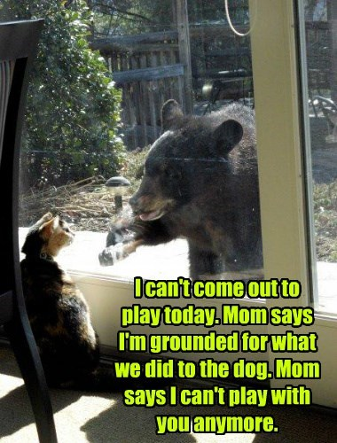 cat bear funny grounded