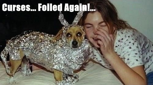animals dogs foiled again curses caption - 8583879424
