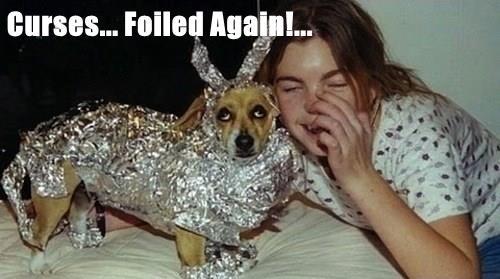 animals again curses caption - 8583879424