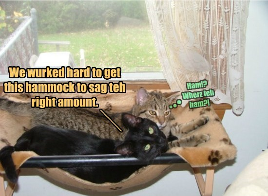 hammock,two cats,caption,Cats,funny