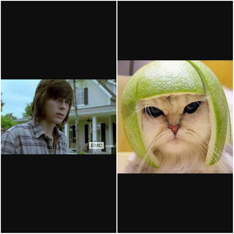 Carl is Melon Cat, No Doubt About That