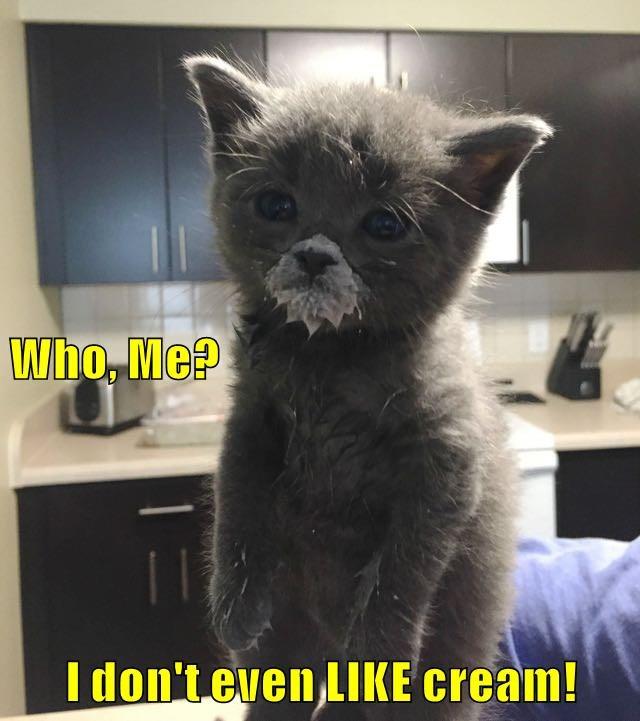 Who, Me? I don't even LIKE cream!