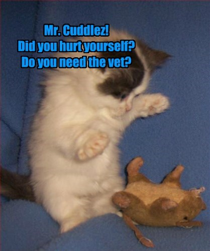 Mr. Cuddlez! Did you hurt yourself? Do you need the vet?