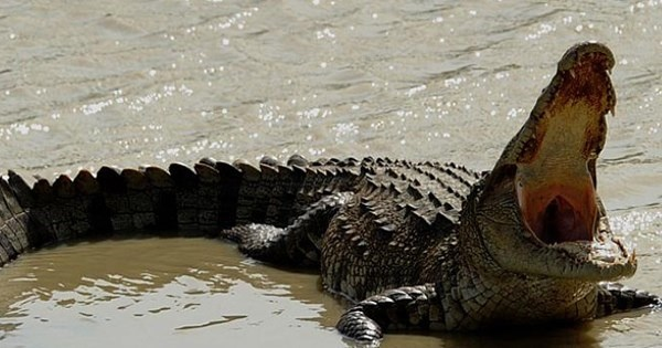 Idea of The Day: Indonesia Might Use Crocodiles to Guard Death Row Inmates