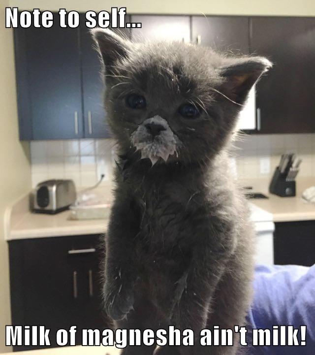 animals aint cat caption milk milk of magnesia - 8584239616