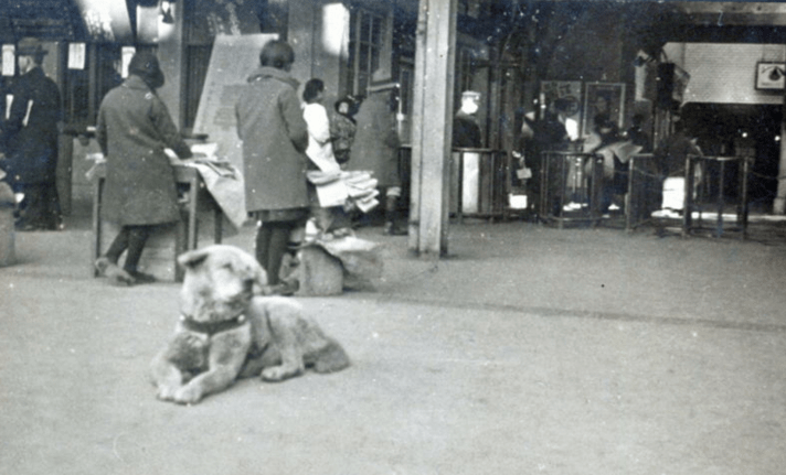 History of The Day: Rare Photo of 'The World's Most Loyal Dog' Emerge