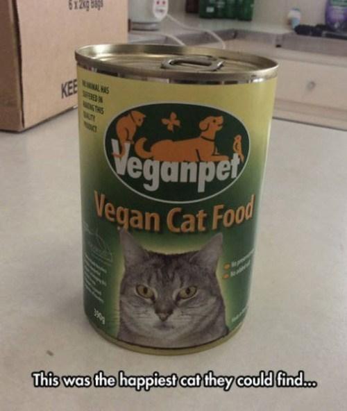 funny memes vegan cat food