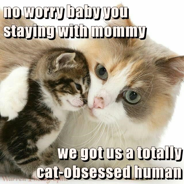 no worry baby you staying with mommy  we got us a totally                    cat-obsessed human