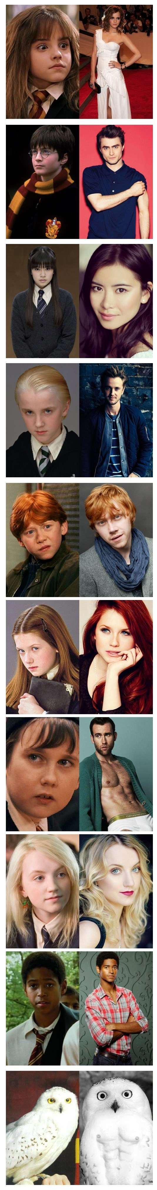 harry potter crecidos