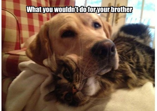 dogs,sweet,caption,Cats