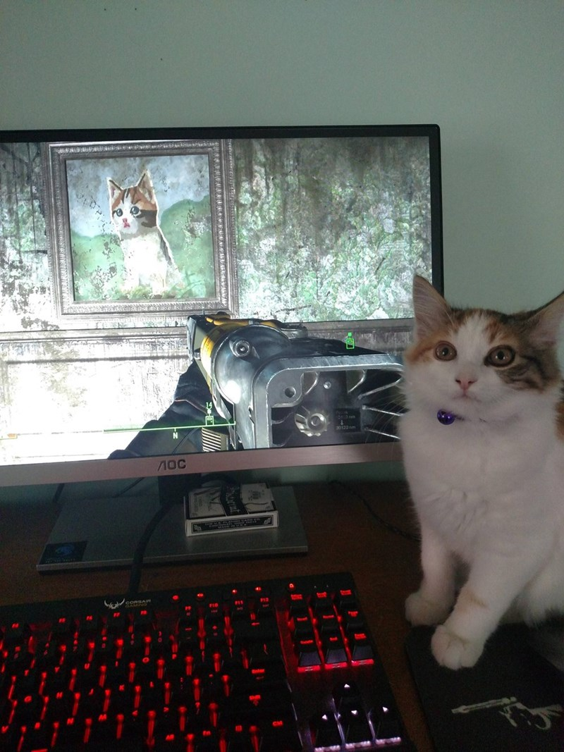 This Cat Really Went to Extremes to Distract His Owner From His Video Game