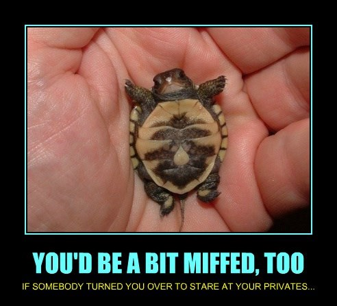 YOU'D BE A BIT MIFFED, TOO