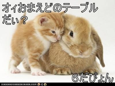 animals - 8585122816