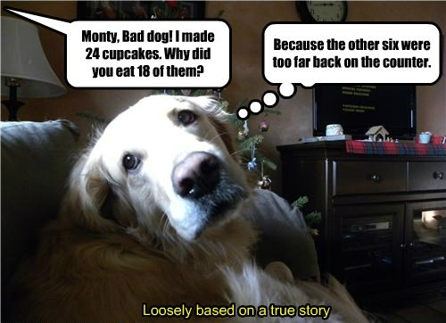 bad dogs counter eat cupcakes back caption - 8585232640
