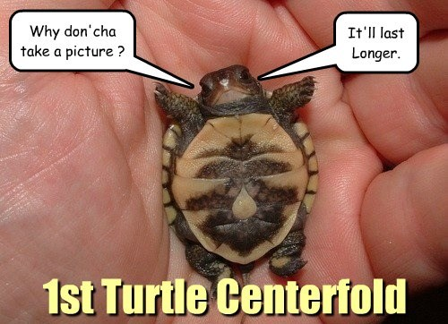 1st Turtle Centerfold