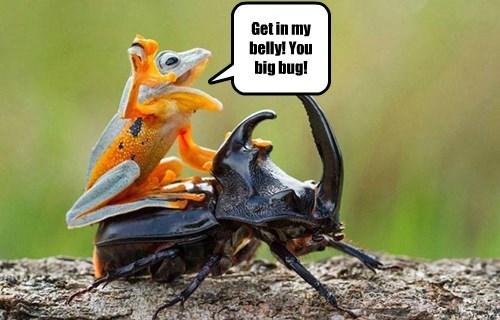 horned beetle bug food funny frog - 8585327104